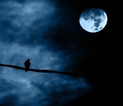 luna e uccello di notte