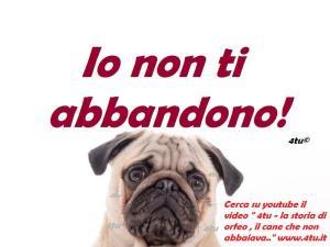 foto video contro abbandono cani animali